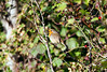 Robin, Seaton LNR. 06/10/12